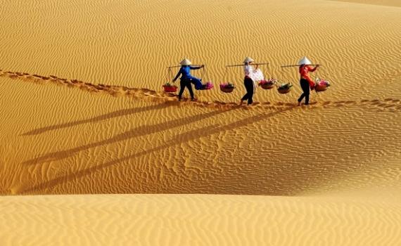 4 đồi cát đẹp nhất Việt Nam nhất định phải ghé một lần trong đời - Báo Thái  Bình điện tử