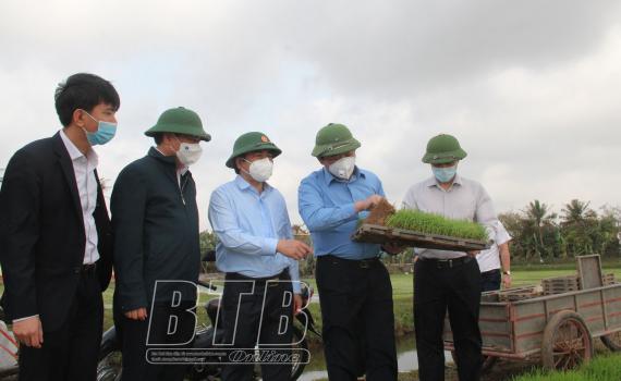 Đồng chí Phó Bí thư thường trực Tỉnh ủy, Chủ tịch HĐND tỉnh đi kiểm tra tình hình sản xuất vụ xuân tại Thái Thụy, Tiền Hải.